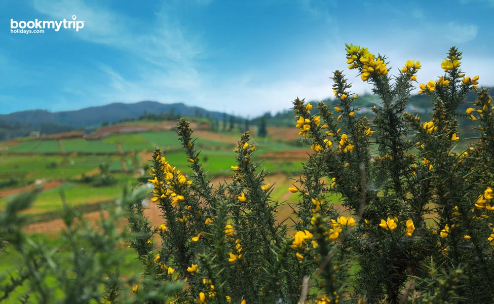 Bookmytripholidays | Destination Ooty