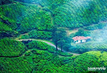 Bookmytripholidays | Destination Munnar